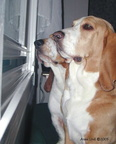 Window Watchers