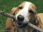 Hoov Dogger's Stick